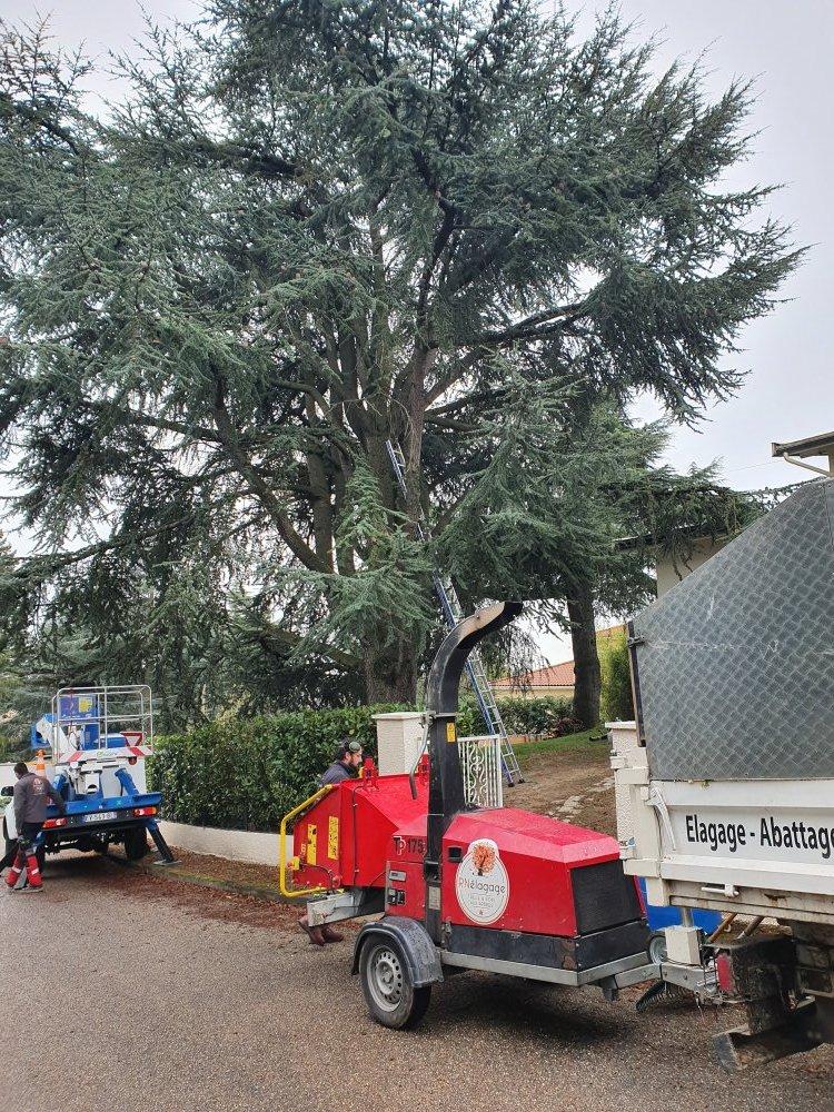 Elagueur Lyon spécialisé dans le broyage de branches