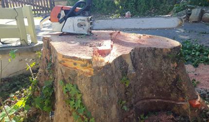 Entreprise d'élagage d'arbre Lyon