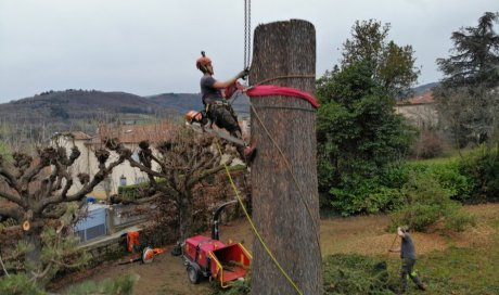 Élagueur professionnel pour démontage d'un arbre difficile d'accès à Lyon