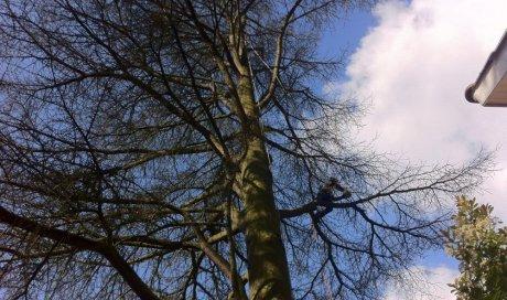 Élagueur pour démontage d'un arbre sec à Lyon