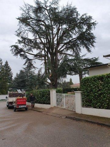 Trouver un bon élagueur sur Lyon spécialisé dans l'élagage d'arbre en bord de route