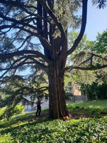 Élagueur pour taille des bois mort d'un cèdre à Lyon