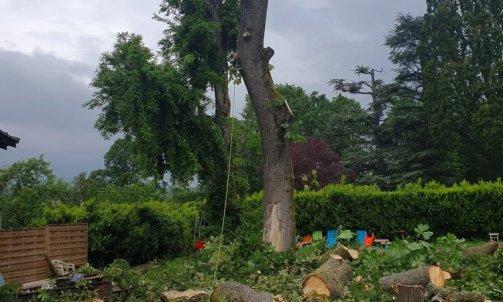 Abattage marronnier malade Francheville