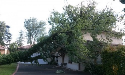 Matériel pour élagage et abattage d'arbre - RN Elagage Lyon